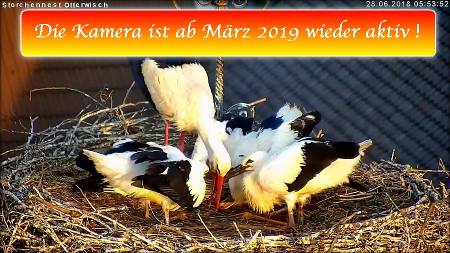 Storch Ende 2018