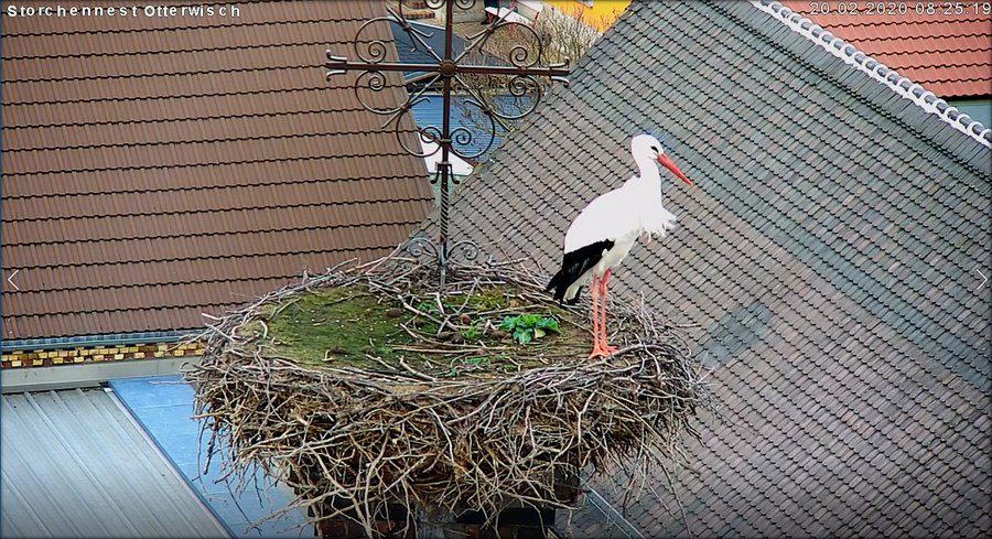 Storch Erster