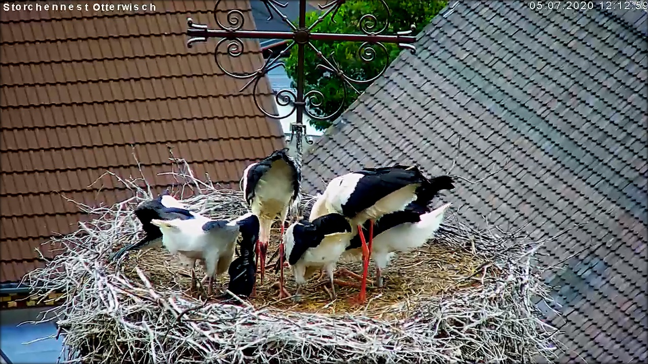 Storch Mittag in Familie